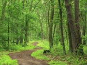 Woodland strategy aims to boost tree cover over Glasgow City Region
