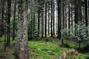 Welsh National Forest planned among net zero by 2050 plans