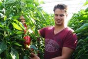 Dutch project throws up difficulties of glasshouse crop forecasting