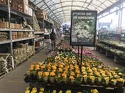 Garden centres sales kick off for the spring UPDATED