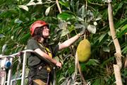 Warm spring creates perfect conditions for Eden Project's fruit trees