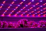 Indoor and rooftop farming features in Sainsbury's future food scenarios