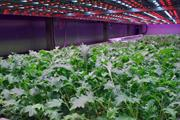 Ocado seeks vertical integration with £17m indoor farm investment