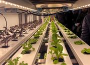 """New research centre to help make UK """"global leader"""" in indoor growing"""