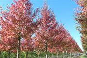Winners and losers in the horticulture week to November 20