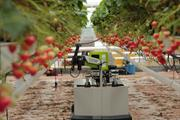 Robotic table-top strawberry picker launched on international market