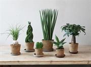 Dobbies launches coir houseplant range