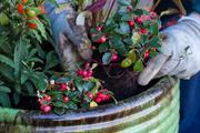 RHS survey reveals autumn gardener ignorance