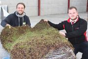Sedum green roofs growing in popularity across the UK and Ireland