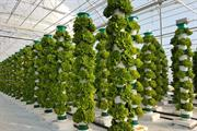 Ambitious expansion under way for low-cost vertical growing technique