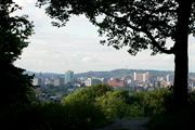 Sheffield to draw line under past conflicts with new street tree strategy