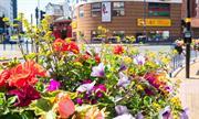 Plantscape wins new work with BID following good feedback