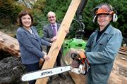 Felled DED elms provide timber for new parks project