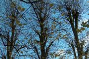 """Street tree arisings """"can have value as insulation material"""""""