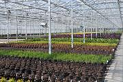 Plant nurseries set to save thousands of plants a year thanks to new Pershore College test