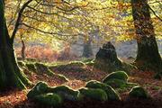 Online guide launched to explain ancient woodland protection to planners