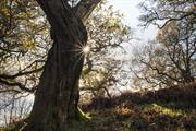 Active threats to ancient woods tops a thousand, says Woodland Trust