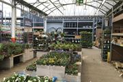 B&Q research finds dream garden costs £1,770