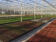 First biochar product receives RHP approval for Dutch commercial horticulture