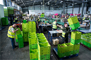 Butters Group bought by Flamingo Horticulture