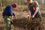 Grant enables urban coppicing for skills and social inclusion