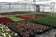 Cherry Lane Garden Centres opens nursery at former David's centre