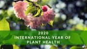 International Year of Plant Health closing ceremony delayed for six months