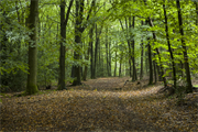 Forestry and woodland management for non-foresters courses launched