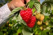 Global Plant Genetics increases raspberry links with James Hutton