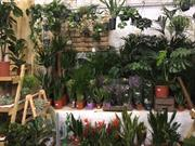 RHS forms houseplant advisory group