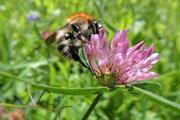 """Thiacloprid """"may benefit bees"""" say Swedish researchers"""