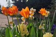 Nearly four million bulbs planted as part of Solihull's £17m greening programme