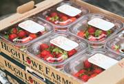 Hugh Lowe Farms' Mini Berries back in Waitrose
