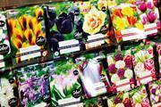 Taylors Bulbs increases turnover and profit