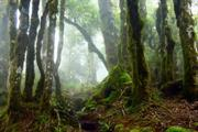 Lottery funding to preserve Atlantic woodlands and their lichens