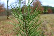 SNP promise mass tree planting if re-elected