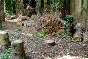 Fareham brings successful prosecution over felled protected trees