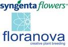 Syngenta Flowers and Floranova combine wholesale activities