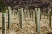 Ditch plastic tree guards, suggests study