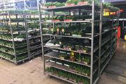 Bedding grower Coletta & Tyson issues new accounts showing Covid-led 95% profits fall