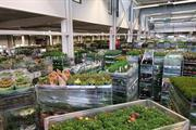 Import restrictions now biggest issue for UK horticulture