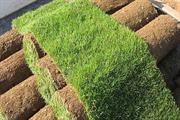 Turf delivery prices set to rise
