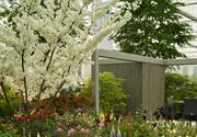 Record-breaking Hillier won't exhibit at RHS Chelsea Flower Show