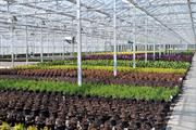Shrubs in short supply across Europe as demand increases
