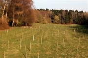 Students plant corridor to link mature woodlands in north east Wales