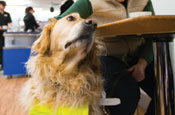 Guide Dogs asks for £2 a month