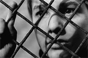 The 400 Blows: showing as part of the Stella Artois film festival