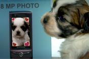 Samsung: puppy love YouTube viral