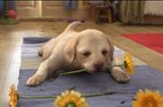 New CGI Andrex puppy