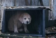 Budweiser: 'lost puppy' Super Bowl spot